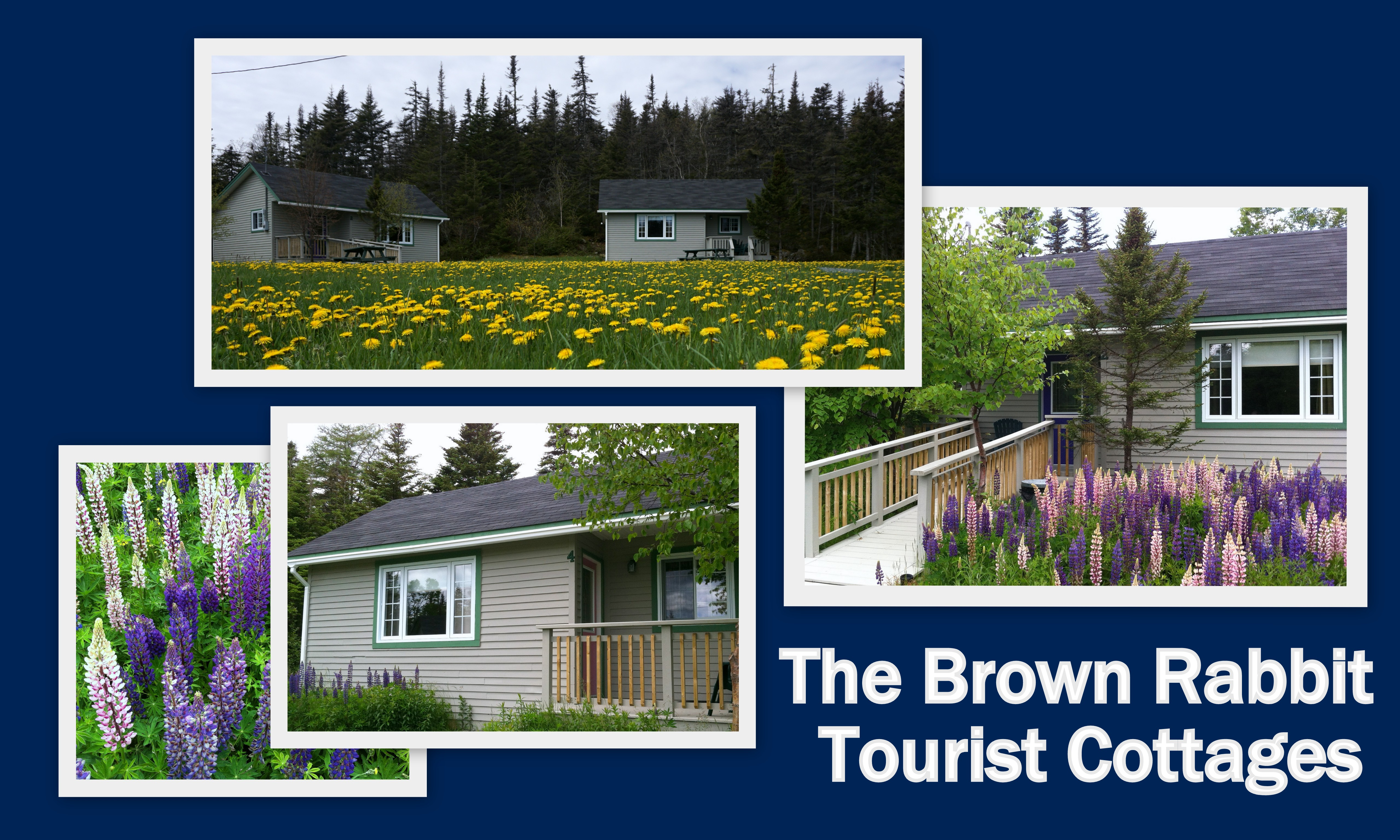 Full size lightbox of Brown Rabbit Cabins image 0